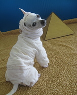 Creative costume ideas for dogs: Noodle The Mummy Halloween Costume