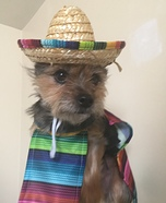 Ole Pup Homemade Costume