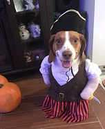 Ollie the Beagle Pirate Costume