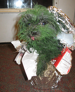 Oscar the Grouch Dog Halloween Costume