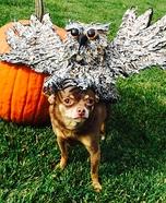Owl Dog Homemade Costume