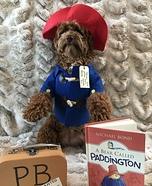 Paddington Bear Dog Homemade Costume