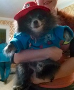 Paddington Bear Dog Homemade Costume
