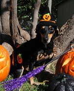 Paw Witch Dog Homemade Costume