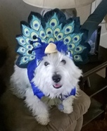 Peacock Puppy Homemade Costume