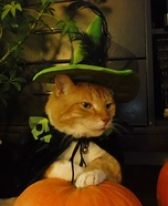 Peanut the Wizard Cat Homemade Costume