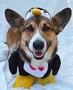 Penguin Dog's Costume