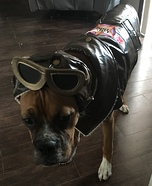 Pet Pilot Homemade Costume