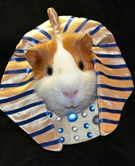 Pharaoh Pig Homemade Costume