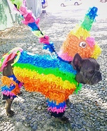 Pinata Puppy Homemade Costume