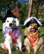 Pirate and Witch Dogs Costume