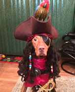 Pirate Captain Jack Sparrow Dog Homemade Costume