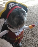 Pirate Louie Homemade Costume