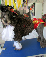 Pirate Poodle Homemade Costume