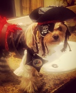 Pirate Pup Homemade Costume
