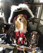 Pirate Sadie Dog Homemade Costume