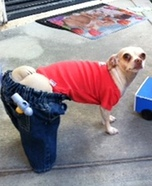 Creative costume ideas for dogs: Plumber Dog Costume