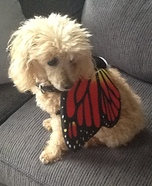 Poodle Butterfly Costume