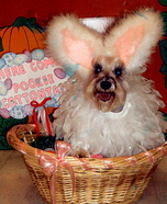 Easter Bunny Halloween Costume for Dogs