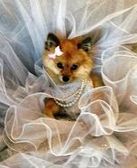 Pretty Fashionista Dog Homemade Costume