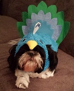 Pretty Peacock Dog Costume