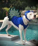 Pretty Peacock Dog Homemade Costume