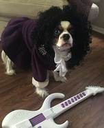 Prince Dog Homemade Costume