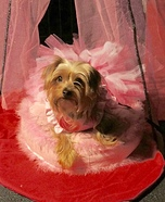 Princess Coco Dog Costume