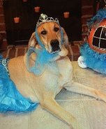 DIY Princess Dog Costume