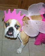 Princess Fairy Dog Homemade Costume