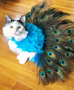 Proud Peacock Homemade Costume for Cats