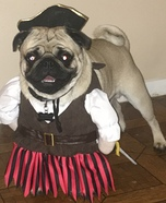 Pug Pirate Costume