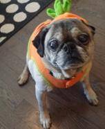 Pugkin Costume