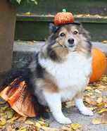 Pumpkin Dog Homemade Costume