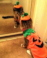 Pumpkin Kitten Costume