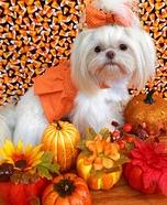 Pumpkin Princess Dog Homemade Costume