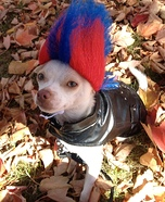 Homemade Punk Rock Costume for Dogs