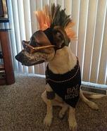 DIY Punk Rocker Dog Costume
