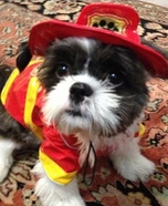 Puppy Fire Rescue Costume for Dogs