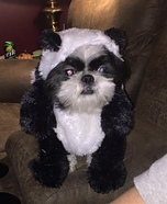 Puppy Panda Homemade Costume