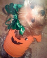 Puppy Pumpkin Homemade Costume