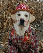 Puppy Scarecrow Homemade Costume