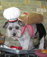 Purebred Dog Homemade Costume