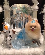 Creative costume ideas for dogs: Elsa from Frozen Dog Costume