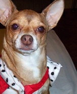Queen of Hearts Dog Costume