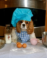 Rachael Ray Dog Homemade Costume