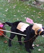 Racing Horse Dog Homemade Costume