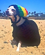 Rastawear Dog Costume