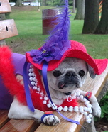 Creative costume ideas for dogs: Red Hat Society Costume