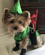 Robin Hood Dog Homemade Costume